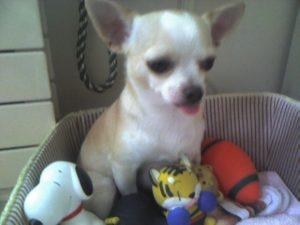 mydog4